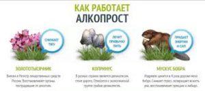AlkoProst - คำแนะนำ - สั่ง ซื้อ ได้ ที่ไหน - ของ แท้