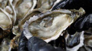 Oyster-Men-ราคา-ดี-ไหม-Thailand